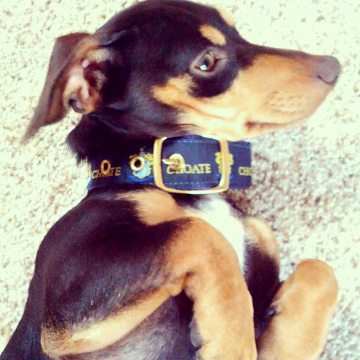 Monty in Choate Collar | Taste As You Go
