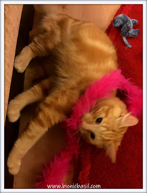 ginger cat wearing a pink feather boa, cute cat,