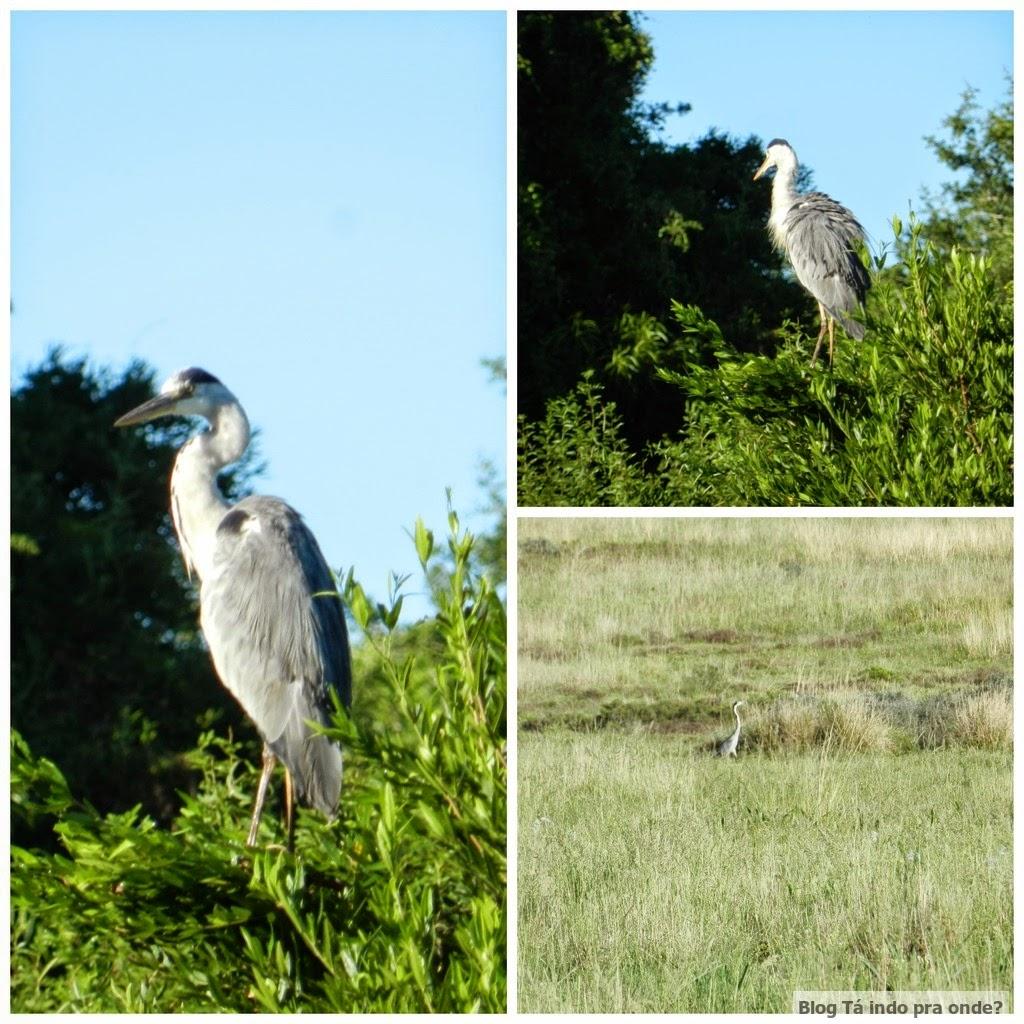 pássaros na África do Sul