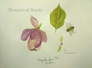 Bee and Magnolia Study : Watercolour.