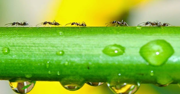 How Ants Go Marching And Never Cause Traffic Jams