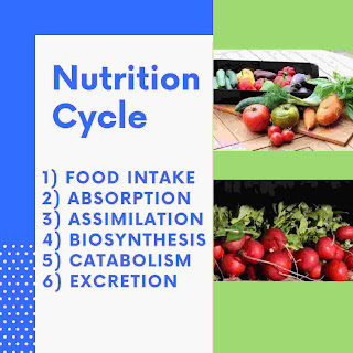 Why is nutrition important
