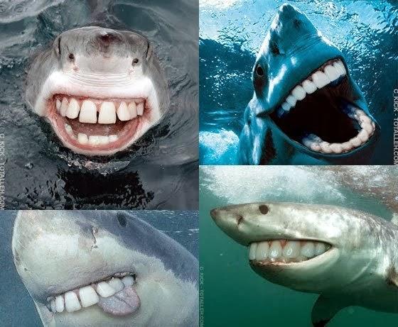 Sharks with human teeth - photo#29