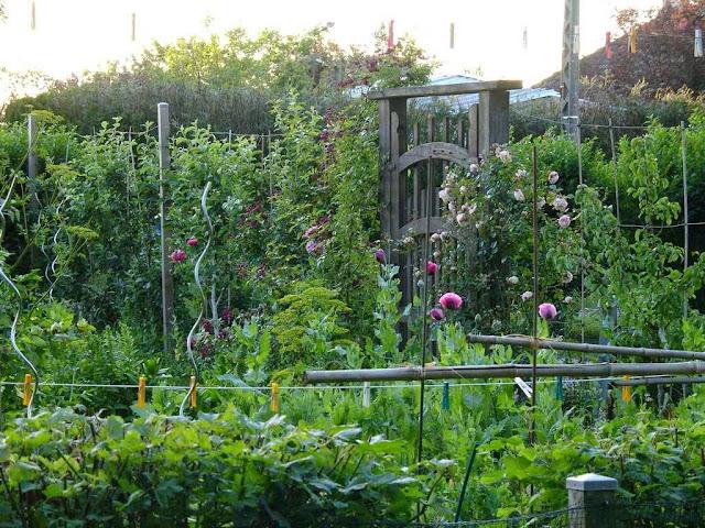 Le potager for Amenagement jardin potager