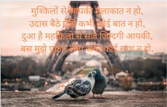 love bird shayari