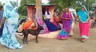 सोमवती अमावस्या के उपलक्ष्य में श्री गोवर्धन गौशाला में महिलाओं ने वटवृक्ष के लगाए फेरे