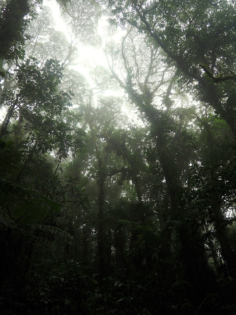 Cloud Forest, Monteverde, Costa Rica