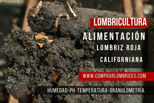 Alimentación de lombriz roja Californiana dentro de la Lombricultura uno de los aspectos más importantes