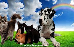 ¿Tienen los animales una misión espiritual más profunda en la Tierra?