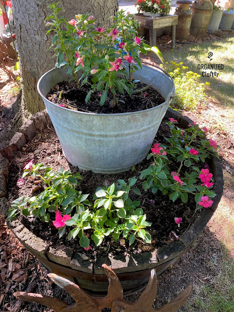 Photo of a barrel planter with impatiens & a bucket of fuchsias