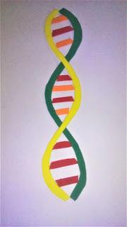 elaboracion de maqueta de la estructura del adn