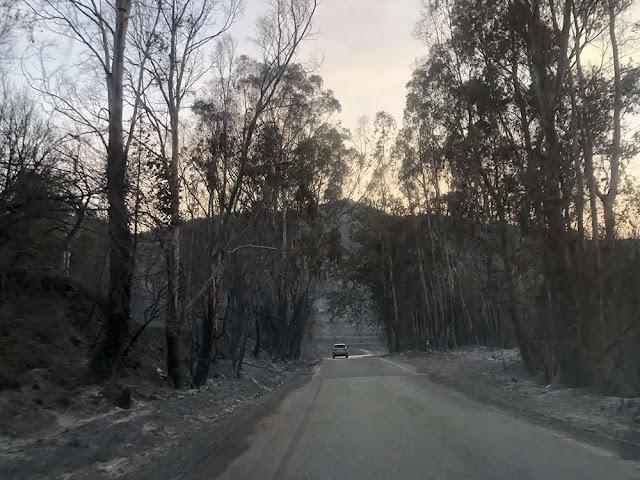 Επιτροπές καταγραφής ζημιών από τις πυρκαγιές συγκροτήθηκαν σε Αρκαδία, Λακωνία και Μεσσηνία