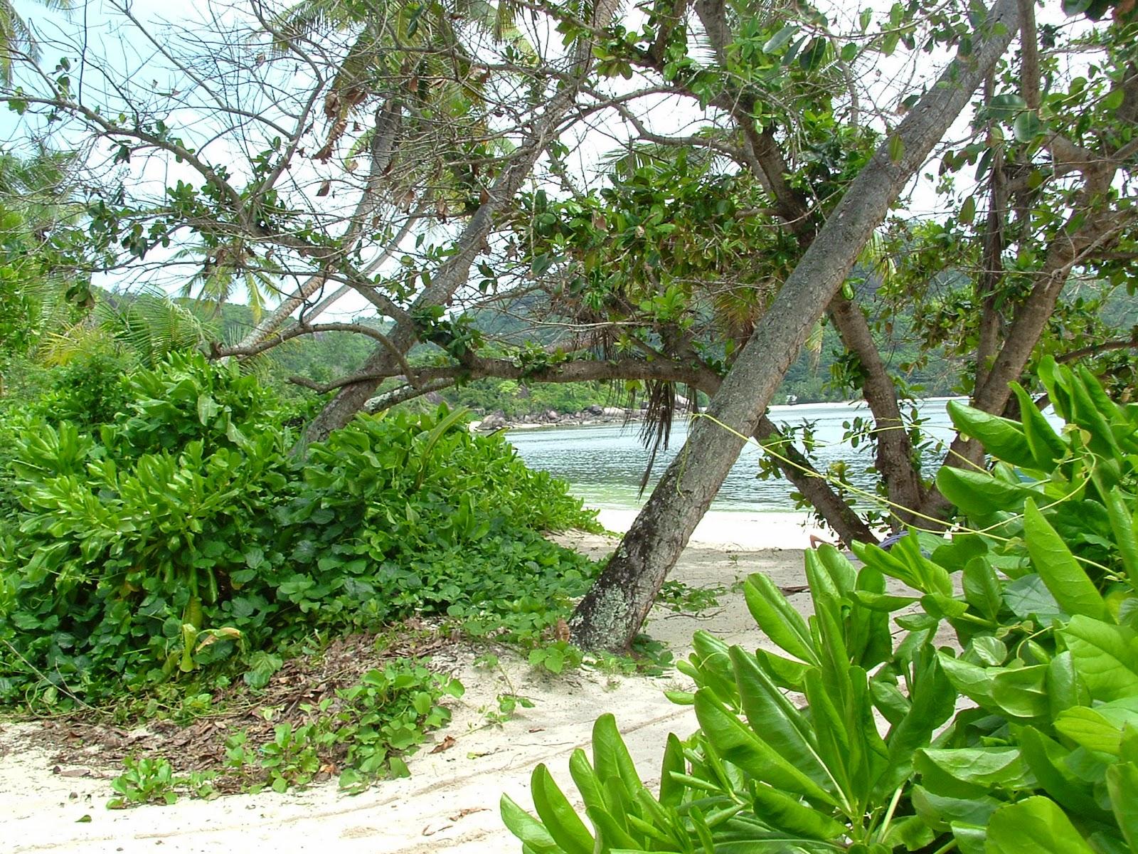 Seychelles Mahè Baia Lazare