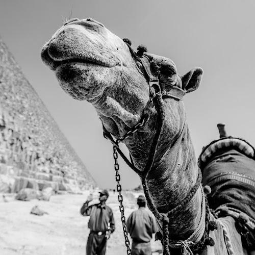 Pirámides de Giza | Curiosidades, Historia y Características 🥇