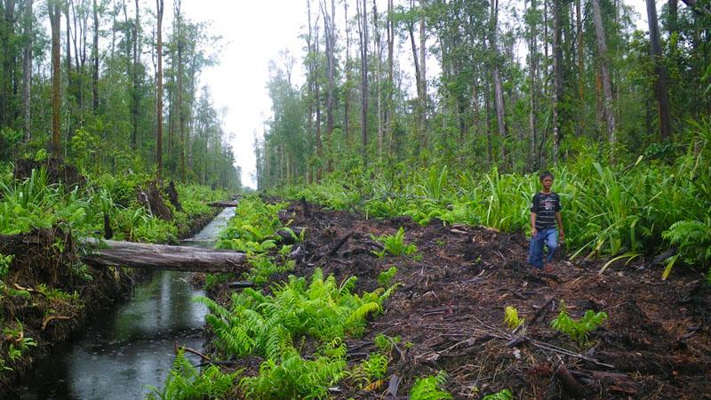 Indonesia Pertama Terapkan Pemantauan Tinggi Muka Air Gambut