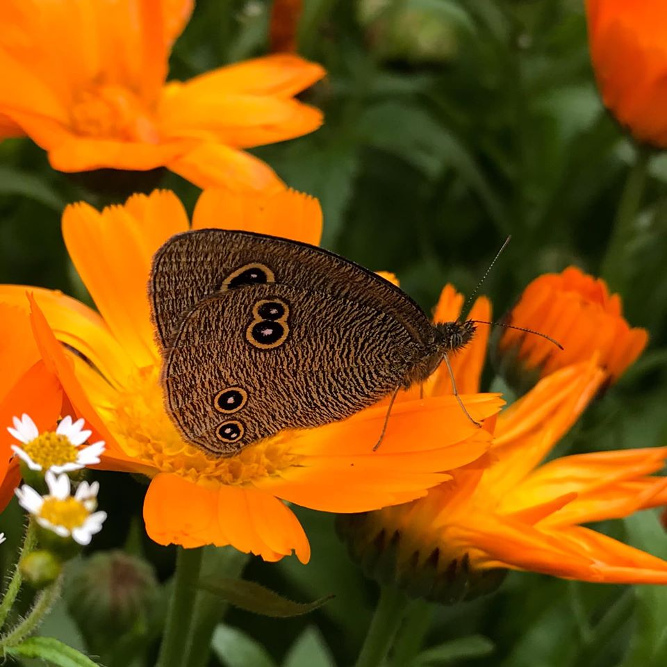 Beautiful flower kissed by Butterfly