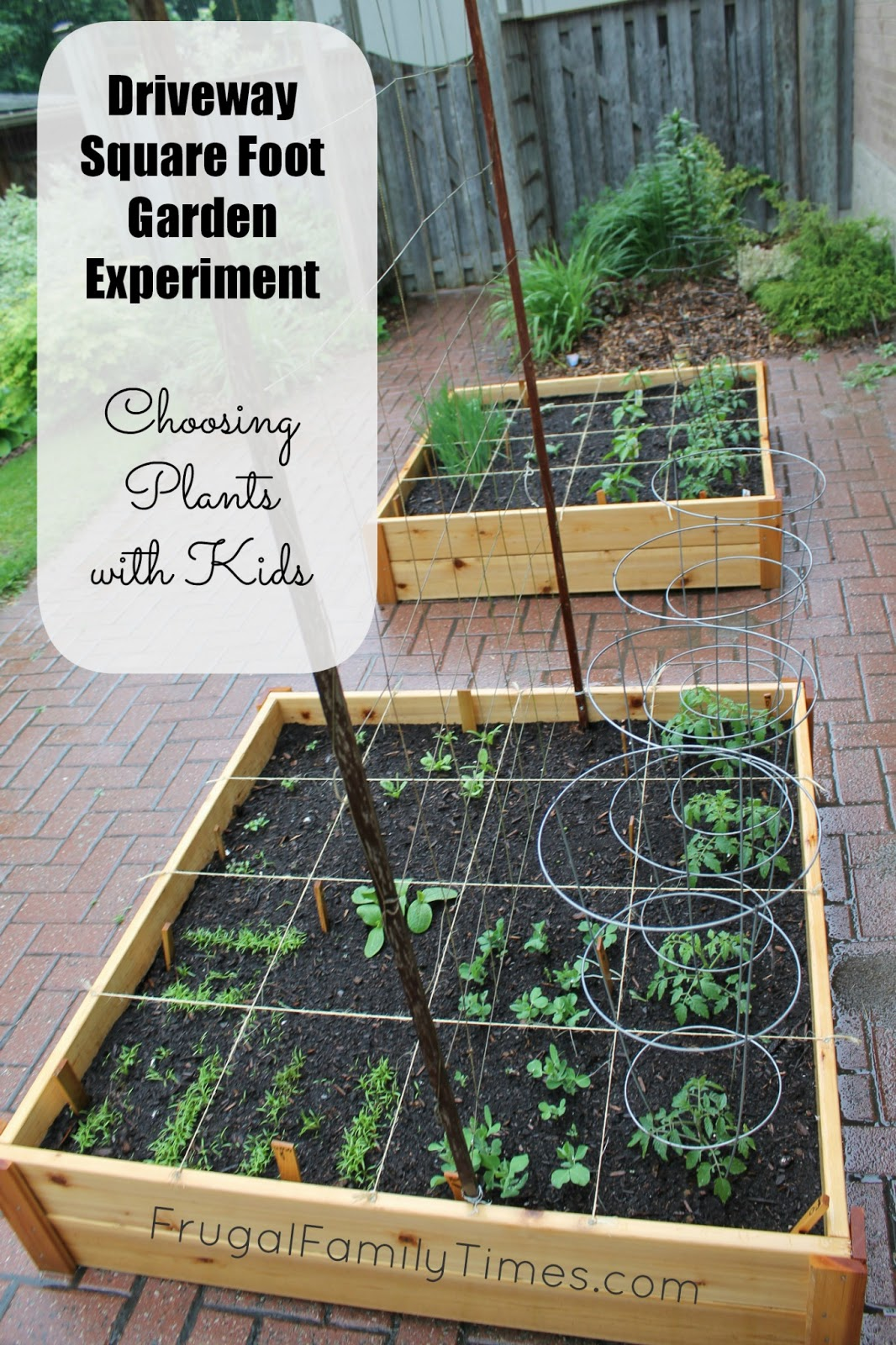 Choosing Vegetable Plants With Kids (Our Square Foot
