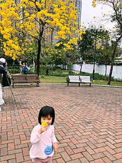 近日的南昌公園是免費賞花親子去好去處。