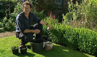 Monty Don Box Hedge Cuttings