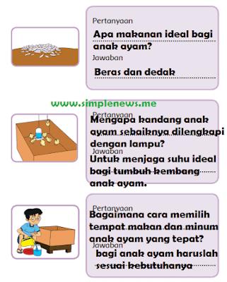 pertanyaan dan jawaban yang berkaitan dengan teks perawatan anak ayam www.simplenews.me