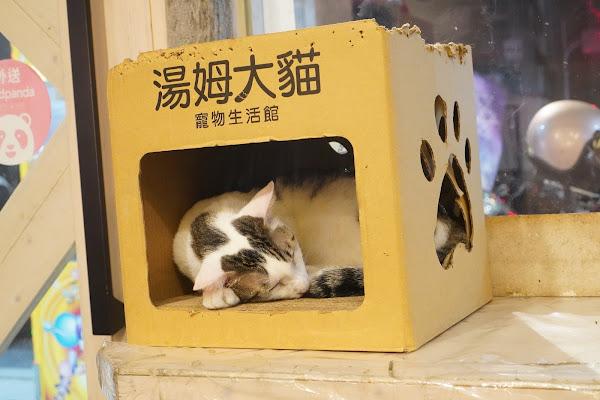 台南永康區美食【魔法咪嚕寵物主題餐廳】環境介紹、寵物小貓