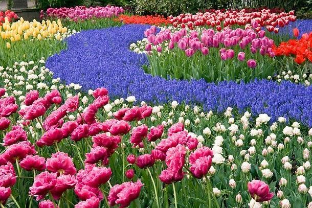Цветник из первоцветов