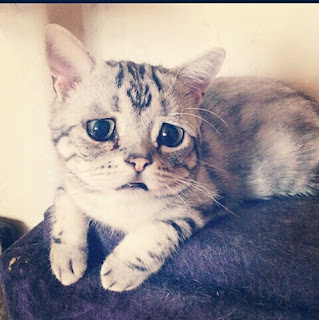 Learn about the most depressed cat in the world
