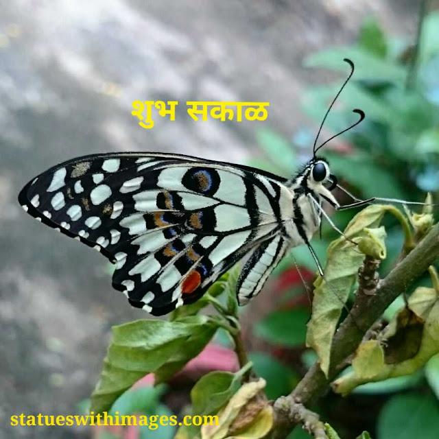gm images marathi,marathi good morning status