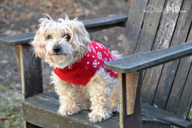 Ruby shows off her red holiday sweater from boohoo.com