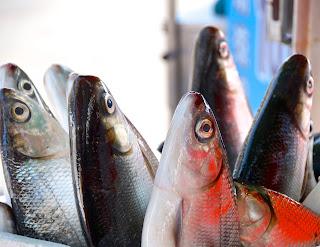 cara memilih daging ikan