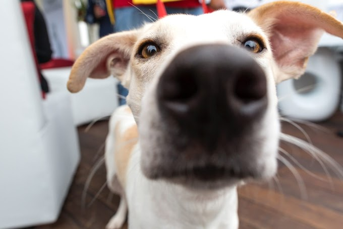 The Best Dog Cameras to Buy in 2021
