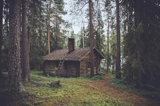 domek z drewna w lesie