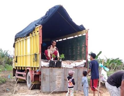 Sewa truk colt diesel Samarinda Surabaya