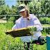 لمـــاذا يمـــوت النحل عند اللســـع