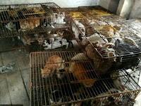 Kejamnya, Pria China Jual Ratusan Kucing ke Restoran untuk Dimasak