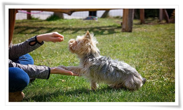 dog training advice and support