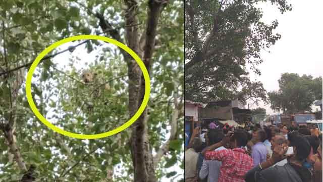अजीतगढ़ में बघेरे के कारण दहशत का माहौल