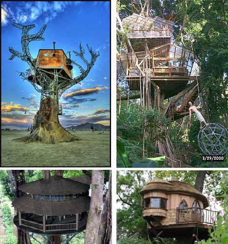 Tree Houses: World Most Amazing Tree Houses