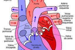 Sistem Peredaran Darah Manusia Beserta Penjelasannya