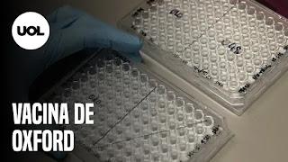 Vacina de Oxford – Mulher sem máscara cospe em rosto de homem – Bolsonaro terá de tomar a vacina escondido