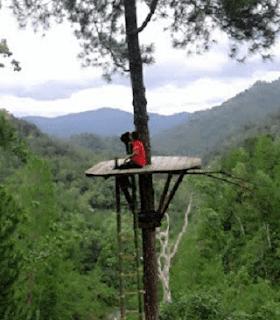 santai di hutan pinus kita pacitan