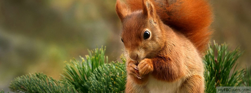 My Fb Covers Squirrel Facebook Cover