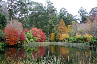 National Rhododendron Gardens, Dandenong Ranges