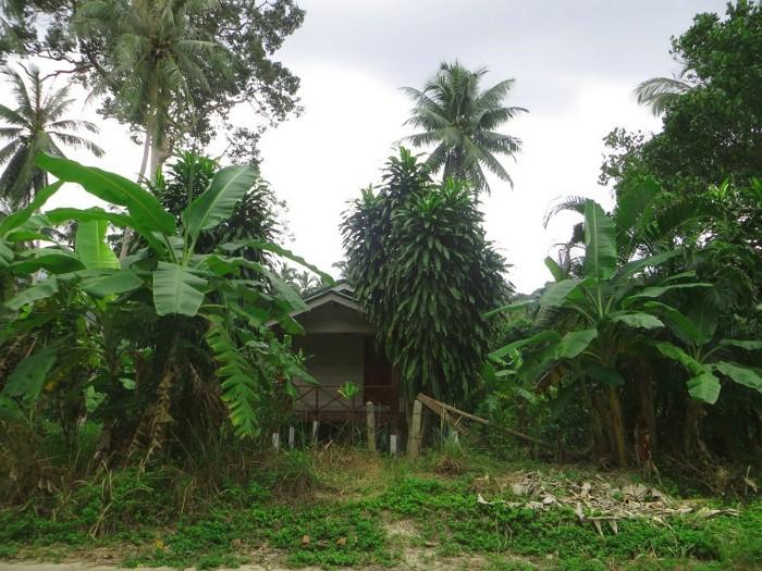 Домик в джунглях без денег