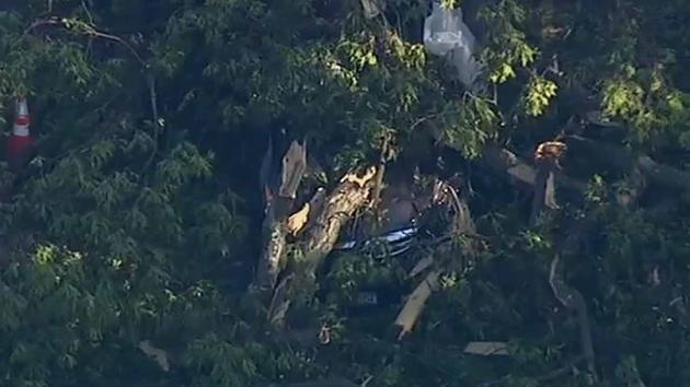 Tree Crashes On Car Nyack