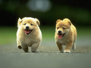 Royal Canin Hypoallergenic Dog Food