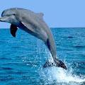 Delfin haqqinda melumat