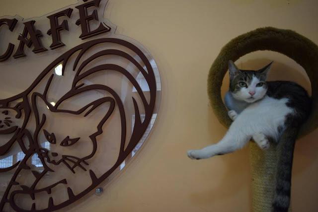 visit cat cafe budapest