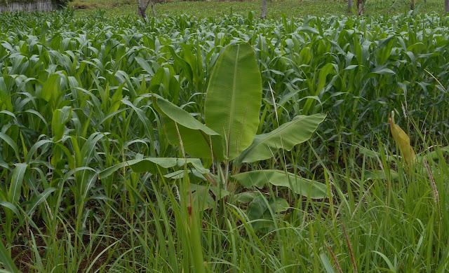 Meningkatkan produksifitas pertanian dengan  teknologi terbaru