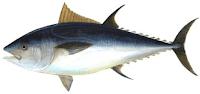 Tuna Fish in Tamil